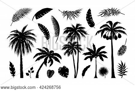 Palm Silhouette. Exotic Jungle Foliage. Tropical Trees And Branches. Black Leaves Templates. Banana