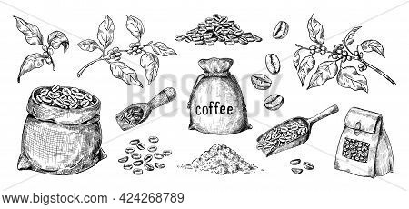Hand Drawn Coffee. Arabica Seeds And Bags Full Of Roasted Beans. Branches With Leaves. Wooden Spoons