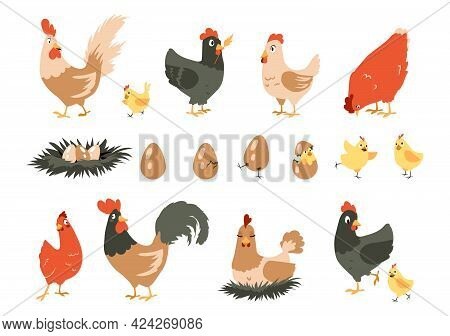 Cartoon Chicken. Cute Domestic Farm Animals. Hen Incubates Chicks In Nest. Stages Sequence Of Bird H