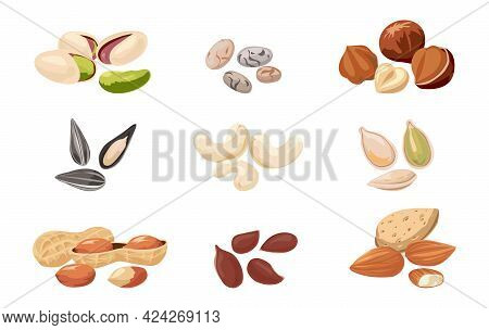 Nuts And Seeds. Cartoon Pistachio, Almonds And Hazelnuts. Cashews Or Peanuts. Tasty Pumpkin, Flax An