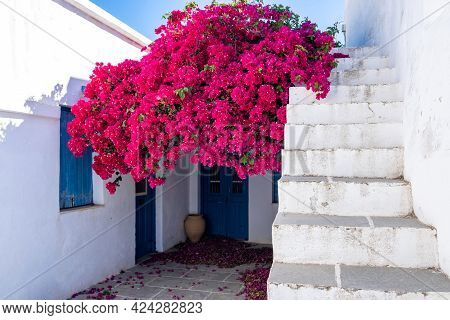 House Whitewashed Walls Sunny Day At Sifnos Island, Greece. Bougainvillea Flower Stone Stairs Backgr