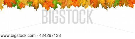 Banner With Autumn Leaves On White Background, Framing Of Bright Fallen Maple Leaves, Autumn Wallpap
