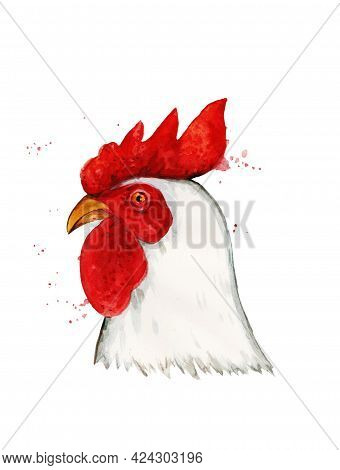 Cock Isolated On White Background. Rooster. Watercolor Illustration.
