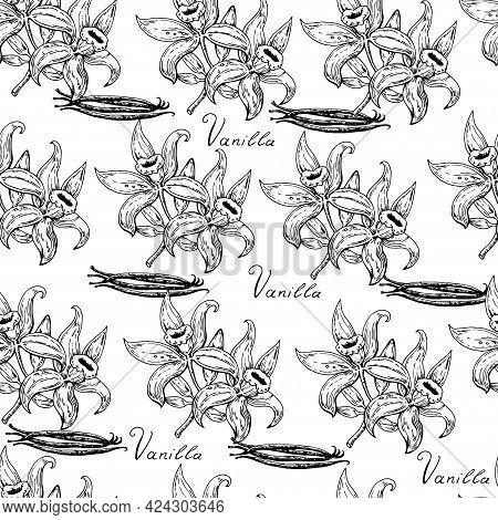 Hand Drawn Seamless Pattern With Vanilla Flowers