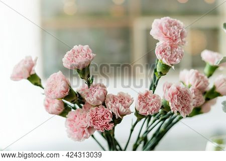 Beautiful blooming pink carnation in a vase
