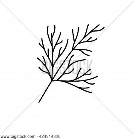 Dill Herbs. Vegetable Sketch. Thin Simple Outline Icon. Black Contour Line Vector. Doodle Hand Drawn