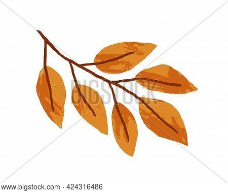 Gold Autumn Leaves On Ash Tree Branch. Sprig With Golden Fall Leaf Of Abstract Foliage Plant. Orange