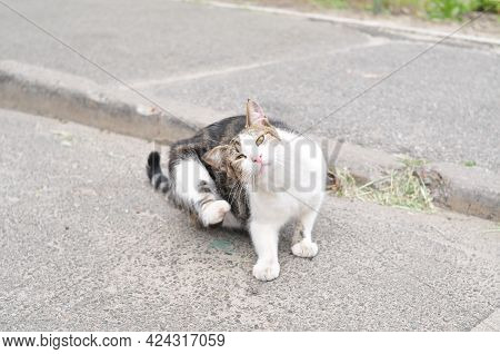 Homeless Striped Cat Itches On The Street