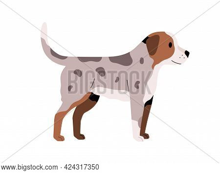 Puppy Standing With Tail Raised Up. Friendly Small Dog. Doggy With Spotty Fur. Side View Of Little C