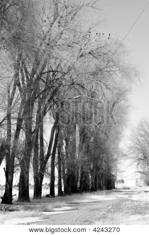 Tree Lined Country Road With Snow