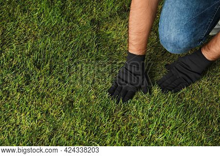 Young Man Laying Grass Sod In Garden, Closeup. Space For Text
