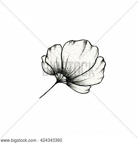 Hand Drawn Simple Flower Isolated On White, Botanic Illustration Of Side View Flower, Beautiful Blac