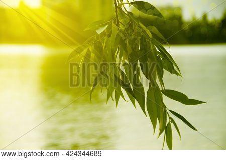 Branch Beautiful Sunset, River, Background Light, Greenery