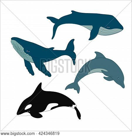 Set Of Vector Whales And Dolphins. Vector Illustration Of Marine Mammals, Such As Blue Whale, Humpba