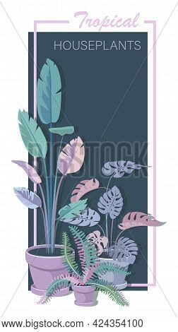 Houseplants. Banana, Fern, Monstera. Vector Floral Poster With The Image Of Room Flowers In Pots