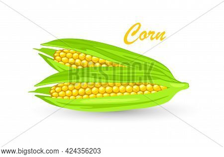 Two Ripe Maize Or Corn Cob, Ears Of Corn With Yellow Kernels, Silk. Cereal Grain. Summer Harvest. Us