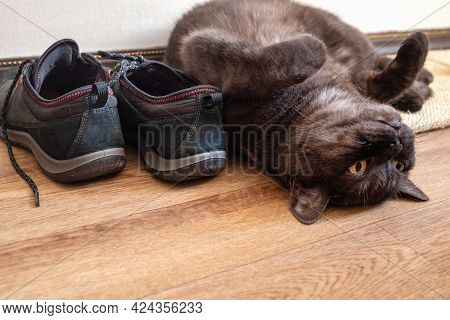 Funny Cat Lays Upside Down On The Floor On His Back Near Pair Of Shoes