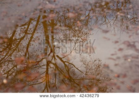 Tree Reflection On A Pond
