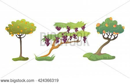 Fruit Tree With Ripe Orange And Pear Vector Set