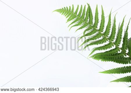 Tropical Green Fern Leaf Isolated On White Background With Hard Shadow. Flat Lay. Top View. Minimal