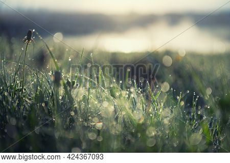 Green Grass With Morning Dew At Sunrise. Macro Image, Shallow Depth Of Field. Beautiful Summer Natur