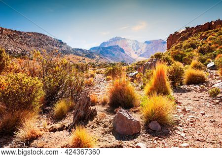 Wild Plants And Trees On The Top Of Tunupa Volcano In Bolivia. Desert Landscapes Of Altiplano Platea