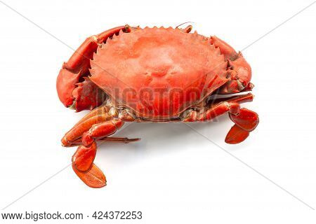Steamed Scylla Serrata Or Serrated Mud Crab Isolated On White Background.