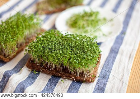 Close-up Of Micro Greens Of Mustard, Arugula And Other Plants At Home. Growing Mustard And Arugula S