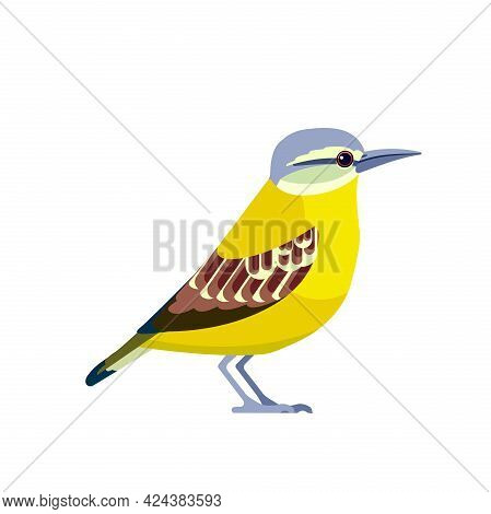Yellow-breasted Chat Is A Large Songbird Found In North America And Is The Only Member Of The Family