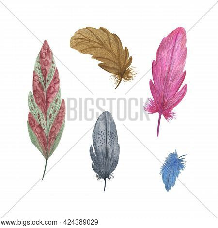 Colorful Fancy Bird Feathers Watercolor Illustration Boho Style Decorative Wings For Creative Rustic