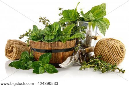 Spicy herbs in basket. Gardening farming. Still life with fresh spice mint oregano and thyme. Isolated on white background.