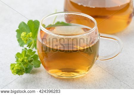 Fresh twig of Lady's mantle and a glass of tea close up i