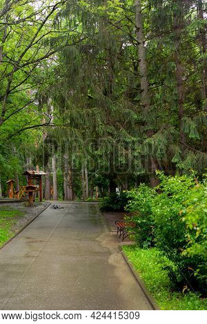 The Path In The Spring Park. Beautiful Alley After Rain