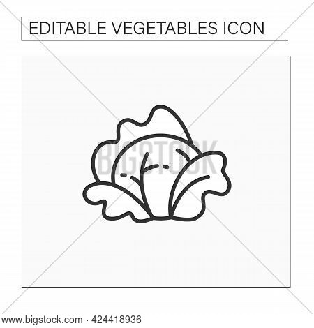 Cabbage Line Icon. Fresh Leaf Vegetable. Edible Plant. Vegetarian, Healthy Nutrition.agriculture Con