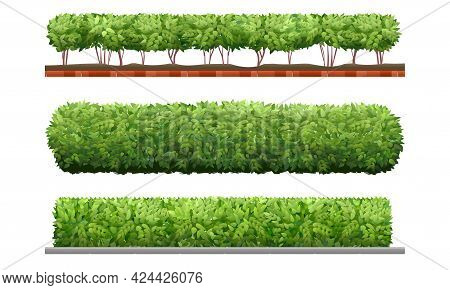 Green Hedge. Bushes Garden Vector Plants Decoration Isolated On White Background, Shrubs Fence Garde