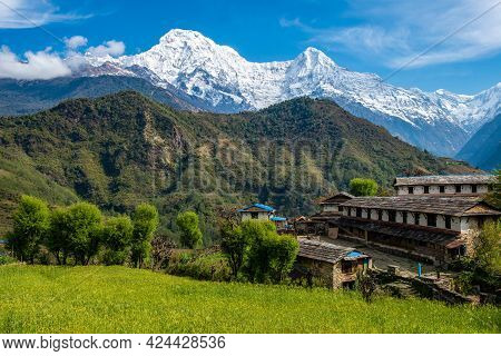 Beautiful View Of Annapurna Range Includes Mt.annapurna South And Mt.himchuli View From Ghandruk Vil