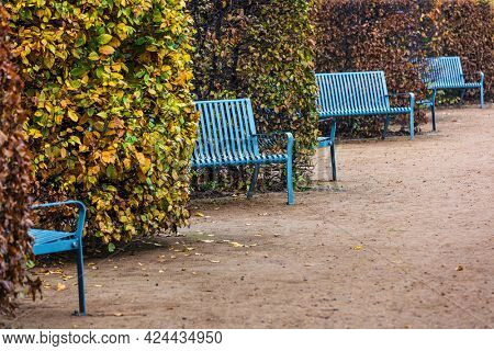 blue benches in the park alley