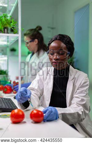 Closeup Of Chemist Scientist Injecting Organic Tomato With Pesticides For Gmo Test. Biochemist Worki