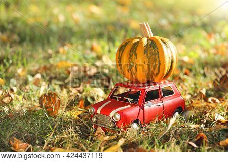 Autumn Season. Pumpkin Delivery .pumpkin Harvest. Halloween And Thanksgiving Holidays.striped Pumpki