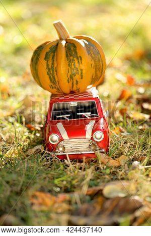 Pumpkin Harvest. Pumpkin Delivery .halloween And Thanksgiving Holidays.striped Pumpkin On A Decorati