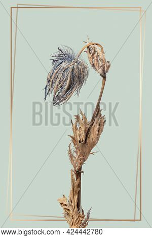 Gold frame with a dried blue thistle flower on a green background