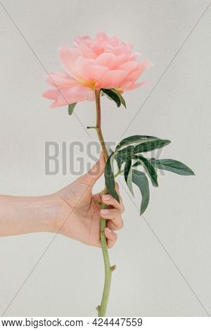 Woman holding a Peony The Fawn