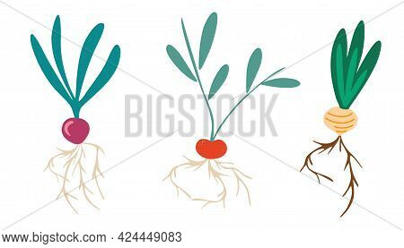 Root Vegetables. Set Of Different Tuberous Vegetables With Tops. Radish, Turnips, Onion. Gardening S