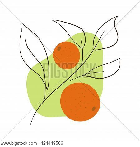 Oranges On A Branch With Leaves On An Abstract Shape Background. Minimalist Citrus Fruit Vector Illu