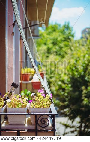 Cozy Small Balcony With Jalousie And Full Of Flowers, Vertical Photo
