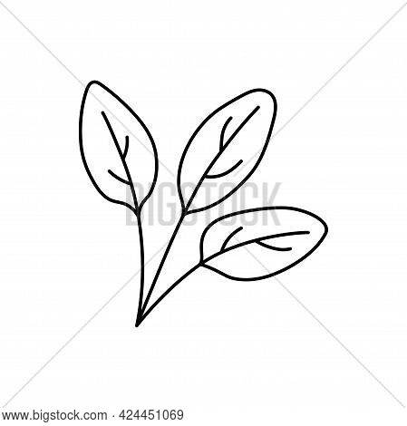 Spinach Herbs. Vegetable Sketch. Thin Simple Outline Icon. Black Contour Line Vector. Doodle Hand Dr