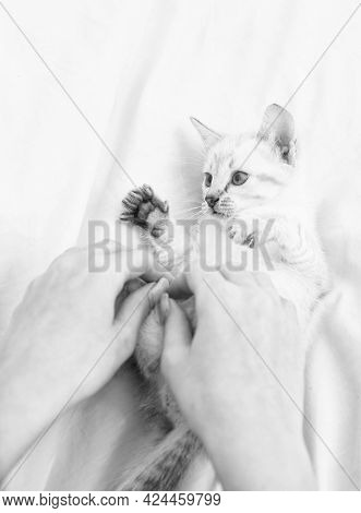 Small Cute Kitten Relax. Baby Cat. Cute White Kitten. Tender And Lovely. White Kitten Playing With F