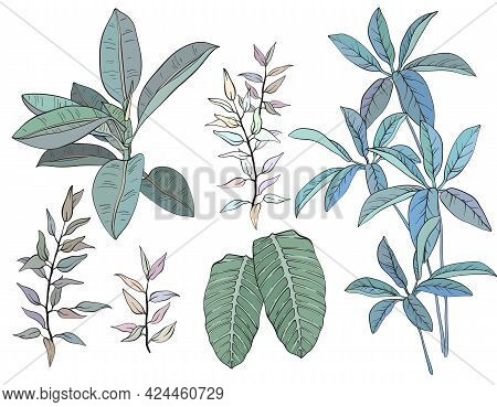 Ficus, Palm Leaves And Tropical Plants Set, Tropical Foliage, Branch, Greenery. Vector Illustration