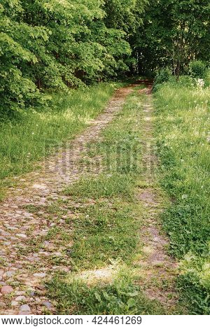 Dirt Road, Path In Sunny Forest, Green Trees. Wild Footpath. Natural Summer Background