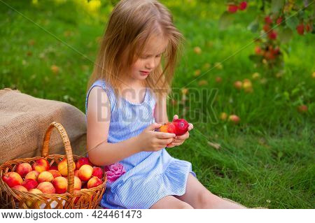 Portrait Of Children In An Apple Orchard. Little Girl In Blue Striped Dress, Sits Next To A Wicker B